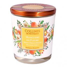 Collines de provence bougie parfumée manguiers en fleurs 180g